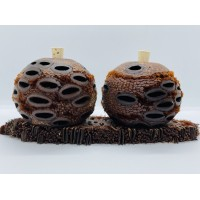 Banksia Pod Diffuser Gift Pack