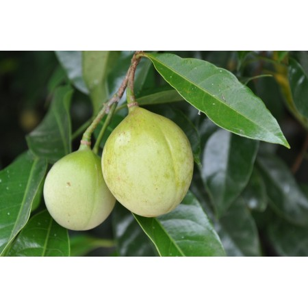 Nutmeg Pure 15mL