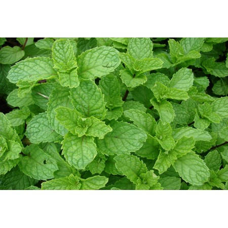 Spearmint Pure 15mL